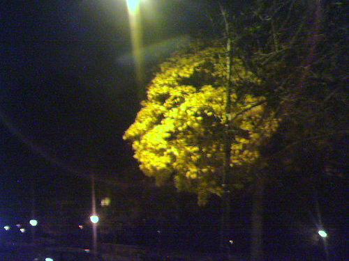 nixon-a-tree-that-looks-like-nixon.jpg