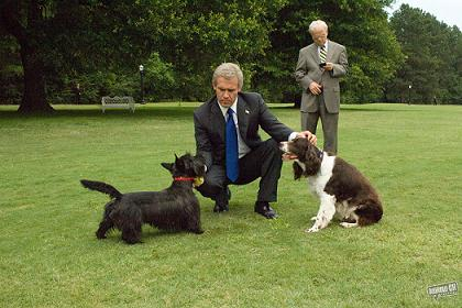 bush-lawn-dogs-w-film.jpg